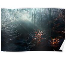 First Rays on a Frosty Morning Poster