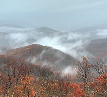 Rainy Day - Blue Ridge Parkway by David Allen
