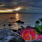 PAINTED ROCK COVE  by Larry Trupp
