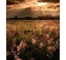 Summer meadow, open - Homer, nr Much Wenlock by rharris-images