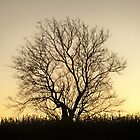 Single sunset  TREE by kodakcameragirl