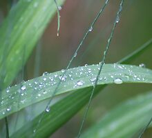 Raindrops on grass by sbm-designs