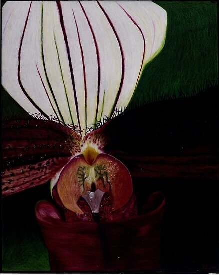 Rare Orchid 1 by Tony Sturtevant