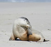 Sea lion at Kangaroo Island, South Australia by Deb22
