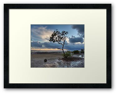 Lone Tree of Wellington Point by gnubee