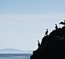 Birds in Silhoutte, Blasket Islands by dendritic