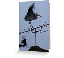 Heron v Magpie Greeting Card