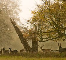 Stags by CJTill