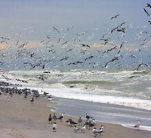 Bird Frenzy by noffi