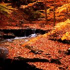 Autumn Falls by Sandy Woolard