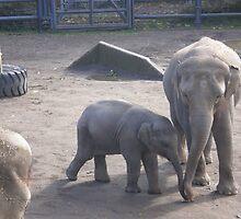 Sam the newest elephant by AuntieBarbie