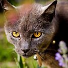 Wild Cat by Josie Eldred