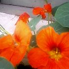 Nasturtium on window sill © by CDeblin