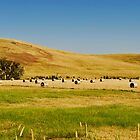Country Side Hay Bales Panorama 02 by DavidIori