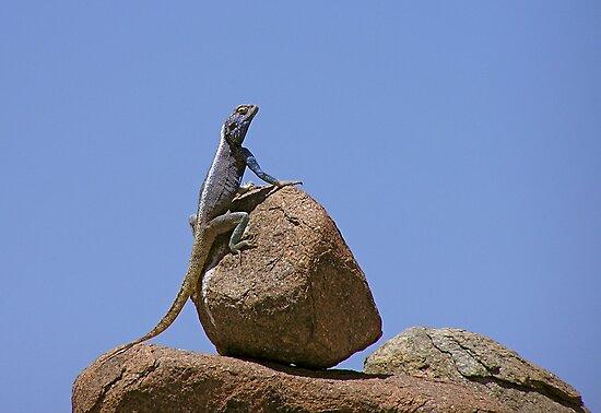 balancing act by mamba