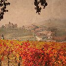 Vineyard&#x27;s colors by becks78