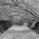 Old Rail Road Bridge by Dave & Trena Puckett