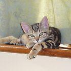 lazing kitten by suebeauchamp
