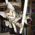 climbing kitten by suebeauchamp
