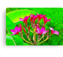Plumeria Flowers Canvas Print