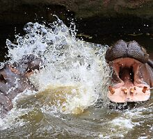 Hungry hippos?? by rnrphoto98