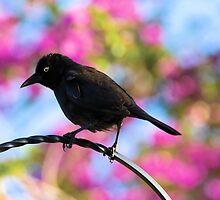 Black Bird by Beatriz  Cruz