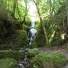 canonteign falls starts small by suebeauchamp