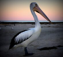 Pelican at Sunrise by Paula McManus