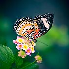 Butterfly by fatalsweets