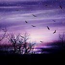 Purple Haze by Elizabeth Burton