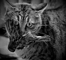 _ cat and bird _ by Louise LeGresley
