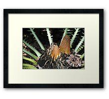 Encephalartos pterogonus Framed Print