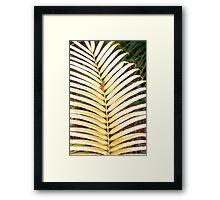 Zamia standleyi Framed Print
