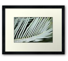 Encephalartos princeps Framed Print