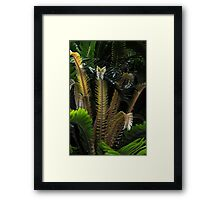 Encephalartos woodii Framed Print