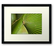 Base of a Palm Frond Framed Print