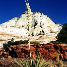 Zion Yucca by Tibby Steedly