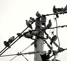 Pigeons on Wire by katpix