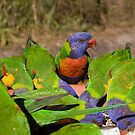Rainbow Lorikeets by Leanne Nelson