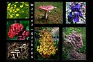 Flowers & Fungi ~ Wairoa by LeeoPhotography