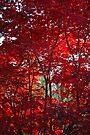 The (Seemingly) Burning Bush by Ainsley Kellar Creations