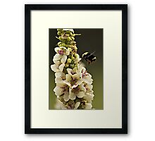 Bee and Verbascum Framed Print
