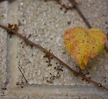 Wearing Her Heart On Her Sleeve by Mandi Whitten