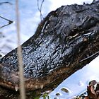 Alligator Head by Mitchell Rudin