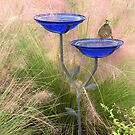 Bird Bath   282 Views by Rosalie Scanlon