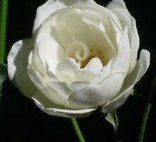 White Gem by GemmaWiseman