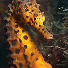 Sydney Underwater by Aengus Moran