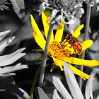 Selective color Yellow by Jan  Tribe
