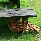 CRUSTY BENCH by MARMARISKEV