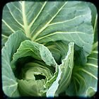 cabbage heart by Northcote Community  Gardens